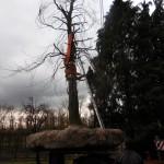 aanplant-rode-beuk-monumentale-villa-Eindhoven-stamomtrek-185-cm-1