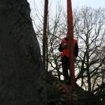 aanplant-rode-beuk-monumentale-villa-Eindhoven-stamomtrek-185-cm-3