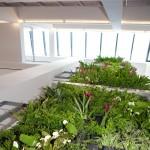 verticale-tuin-lunetzorg-eindhoven-kantoorpand-volledig-beplant-klimplanten-gevelrekken-2