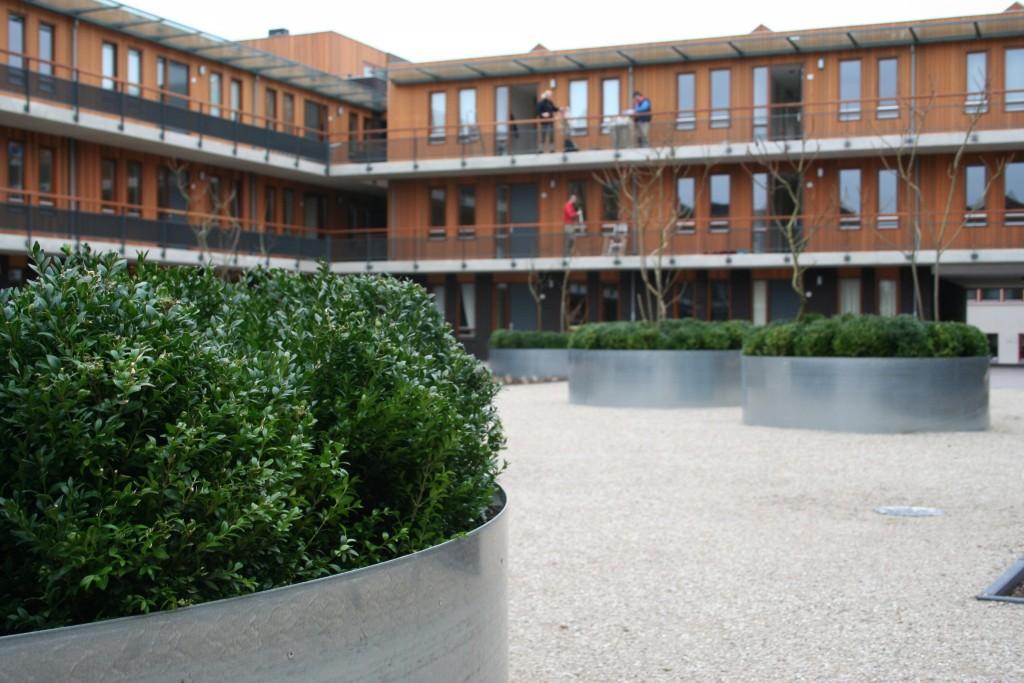 aanleg-daktuin-appartementencomplex-Bladel-moderne-uitstraling-1