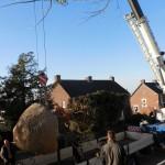 aanplant-mammoetboom-sequoiadendron-giganteum-gewicht-6-ton-heerlen-01