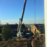 aanplant-mammoetboom-sequoiadendron-giganteum-gewicht-6-ton-heerlen-03