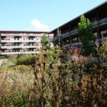 daktuin-bloeiende-bloesem-vasteplanten-appartementencomplex-ouderen-valkenswaard-1