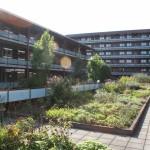 daktuin-bloeiende-bloesem-vasteplanten-appartementencomplex-ouderen-valkenswaard-3