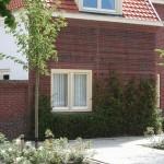 gevelrekken-philipsdorp-lei-klimplanten-vergroening-woonwijk-nestelruimte-vogeltjes-1