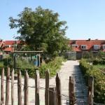 gezamelijke-moestuinen-drents-dorp-eindhoven-duurzaam-biodiversiteit-ecologie-24