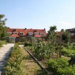 gezamelijke-moestuinen-drents-dorp-eindhoven-duurzaam-biodiversiteit-ecologie-27