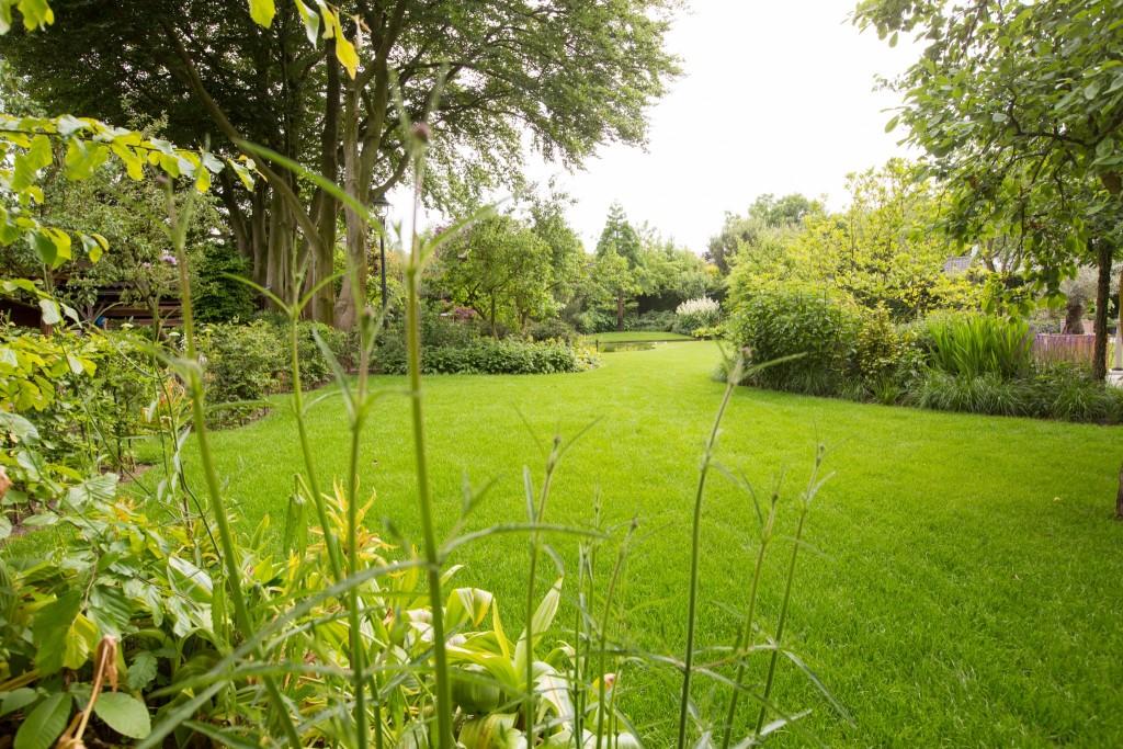 Planten In Tuin : Tuin met grote natuurlijke vijver en bloeirijke vaste planten renders