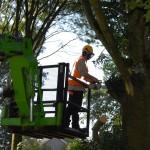 snoeiwerken-snoeien-bomen-eisenhowerlaan-eindhoven-boomverzorging-1