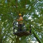 snoeiwerken-snoeien-bomen-eisenhowerlaan-eindhoven-boomverzorging-3