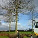 verplanten-moeraseik-tuin-van-hoof-boomverzorging-verplanting-renders-2