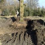 verplanten-oude-leilindes-linde-boerderij-Heeze-1