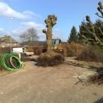 verplanten-oude-leilindes-linde-boerderij-Heeze-2